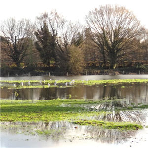 Land for sale: green belt floodplain Feb 2014