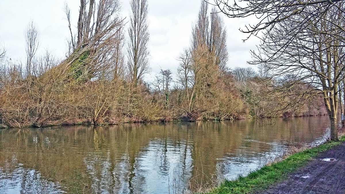desborough-cut-north-bank-trees-feb-2017-1200w